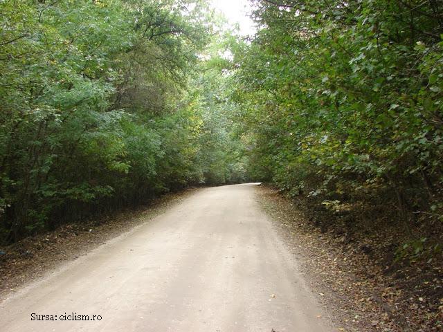primele-perdele-forestiere-de-protectie