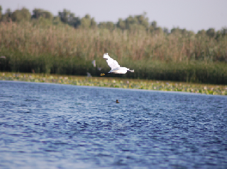 the-danube-delta