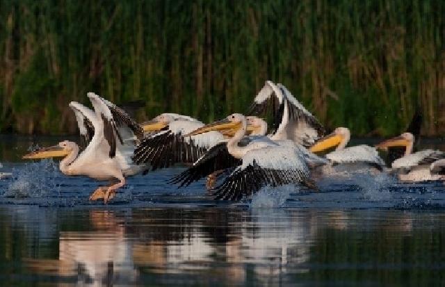das-landesprogramm-zum-schutz-der-wildvogel