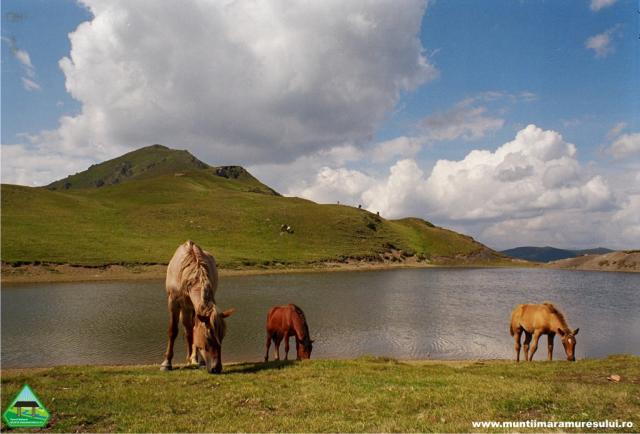 parcul-national-muntii-maramuresului