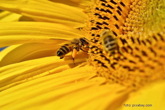 initiativa-cetateneasca-pentru-interzicerea-utilizarii-pesticidelor-si-salvarea-albinelor