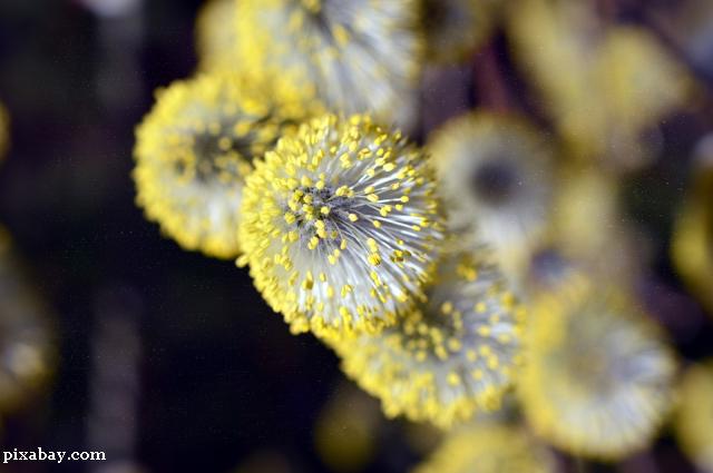 Румуни та сезонна алергія