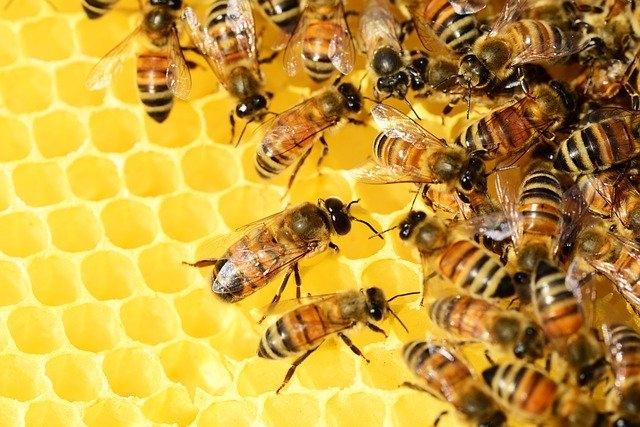 produse comune apicole