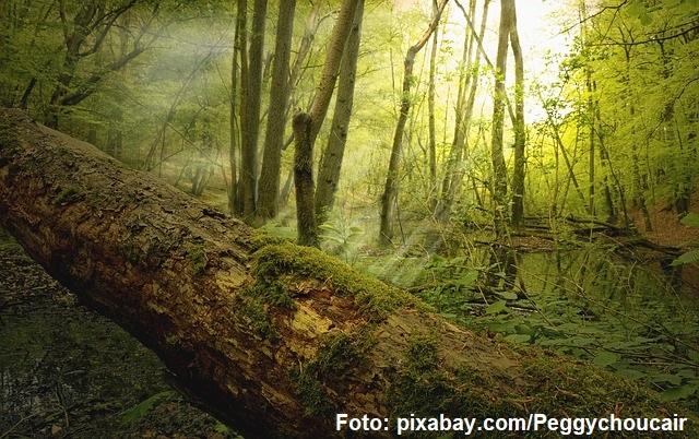 «Мертва деревина в лісах: корисна, нейтральна чи шкідлива?»