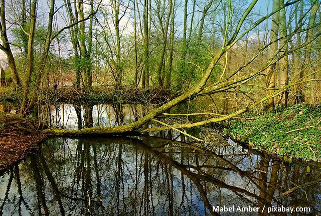 il legno morto nelle foreste - danni o benefici?