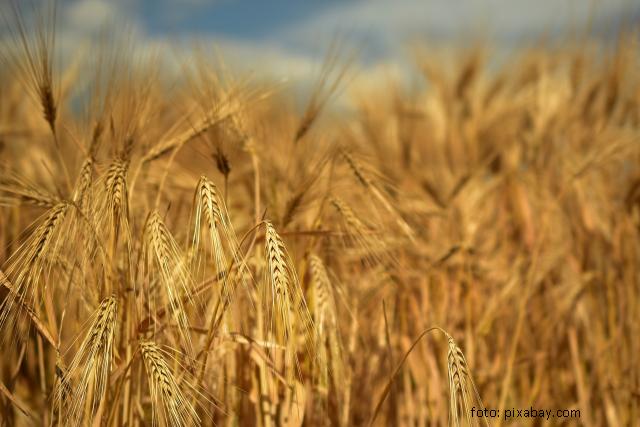 perspectivele-agriculturii-ecologice-in-ue-si-romania