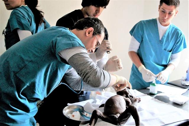 chirurg-roman-salveaza-vieti-in-africa-ecuatoriala