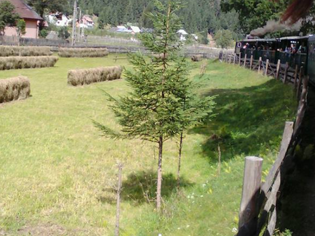 turismo-rural-en-bucovina-