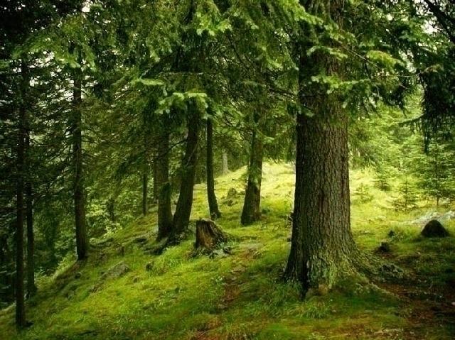 Національний реєстр незайманих лісів
