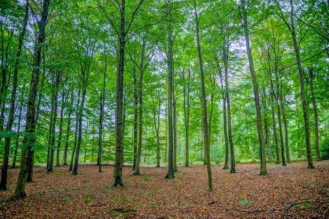 a-petition-for-the-reforestation-of-romania