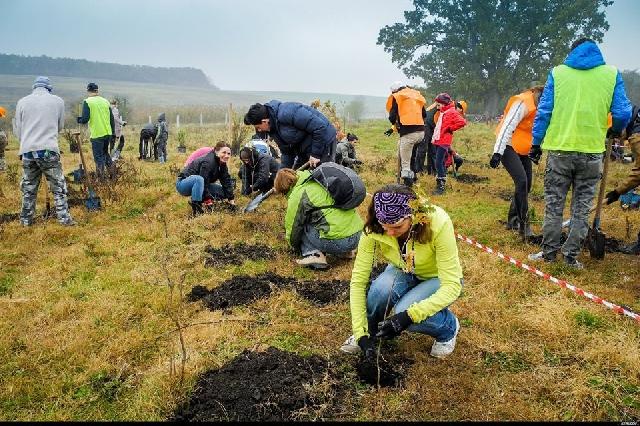 die-volontaeren-schmiede--jugendliche-setzen-grune-projekte-um