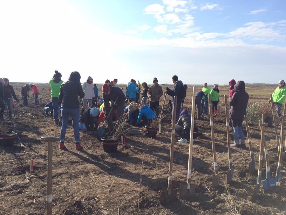 aufforstung-im-suden-rumaeniens-10-000-setzlinge-angepflanzt