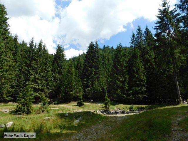 Друга Національна лісова інвентаризація