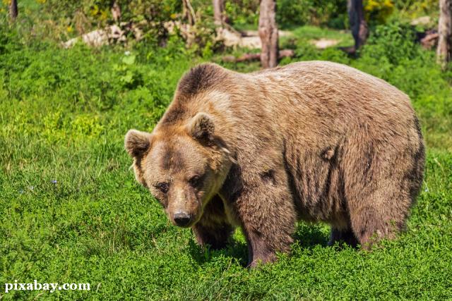 le-probleme-des-ours--de-nouveau-dans-lactualite