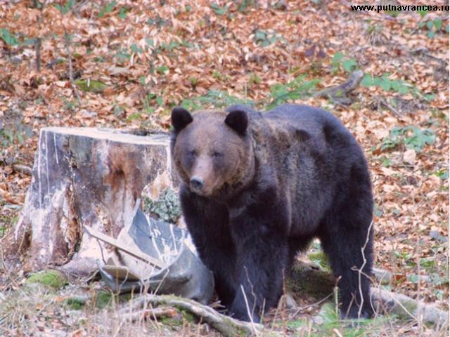 Захист охоронюваних видів дикої фауни