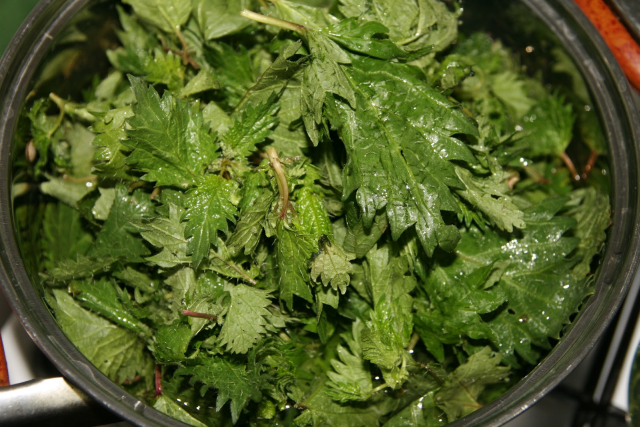 nettle-based-dishes-
