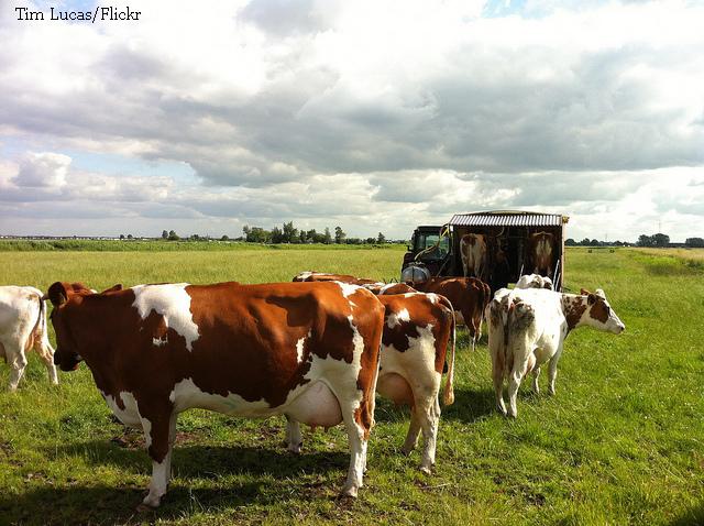 le-marche-des-produits-laitiers