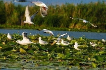 the-danube-delta-cart-view