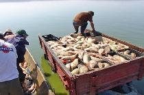 Destructurarea unei reţele internaţionale de traficanţi de peşte