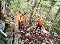 Condiţii pentru practicarea vânătorii în România