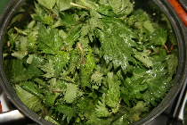 nettle-based dishes